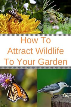Looking to attract some wildlife to your garden? See how to provide what they need (water, food and shelter) to invite birds, butterflies, bees and other beneficial wildlife into your backyard. Learn which plants, shrubs, trees, grasses and flowers to plant to make sure your garden becomes a haven for wildlife. #gardening #wildlife #bees #birds #butterflies #animals