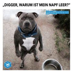 """Lustiger Hund - """"Digger, warum ist mein Napf leer?"""""""