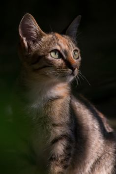 landerscape:  Cat by Chew Guat Choon on 500px.com