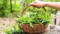 Cas, Jus D'orange, Lemon Balm, Medicinal Herbs, Herb Garden, Perennials, The Balm, Medicine, Healing