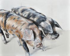 Vicky Palmer It's a Pig's Life oil on canvas 24 x 30 ins (61 x 76 cms) £2,500  #art #artist #painting #painter #farm #farmanimals #hounds #hunting #buyart #interiordesign #countrylife #country #countryside #pigs #dogs #cows