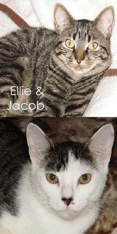 Ellie & Jacob
