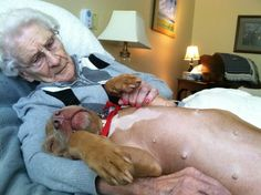 "Peaches, a hospital therapy dog, and a ""comfortee"". - Imgur - pitbulls!"