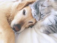 What You Should Know About Kidney Disease in Dogs and Cats