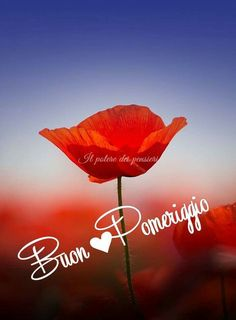 Buon pomeriggio Italian Memes, Italian Quotes, Good Afternoon, Good Morning, Good Day, Good Night, Sunday Morning Quotes, Neon Signs, In This Moment