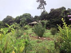 Yoga platform on top of hill, overlooking the Pacific Ocean @ Farm of Life