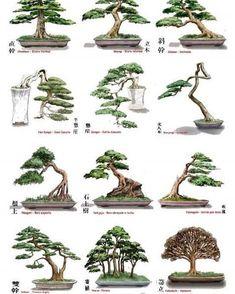 Bonsai Tree Care for Beginners Mini Bonsai, Buy Bonsai Tree, Bonsai Tree Care, Bonsai Tree Types, Indoor Bonsai Tree, Bonsai Pruning, Bonsai Plants, Bonsai Garden, Bonsai Ficus