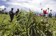 MEXICO CITY (AP) -- Mexico's supreme court has ruled that growing, possessing and smoking marijuana for recreation are legal under a person's right to personal freedoms.  	The measure was approved in 4-1 vote on the five-justice panel.  	At this point, the ruling covers only the plaintiffs in one case, a group of people wanting to form a pot club.  	The ruling Wednesday did not approve the sale or commercialization of marijuana, nor is it expected to lead to general legalization.
