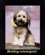 Boldog névnapot, kiskutya sárga virággal képeslapok Decoupage, Dogs, Pictures, Animals, Photos, Animais, Animales, Animaux, Photo Illustration