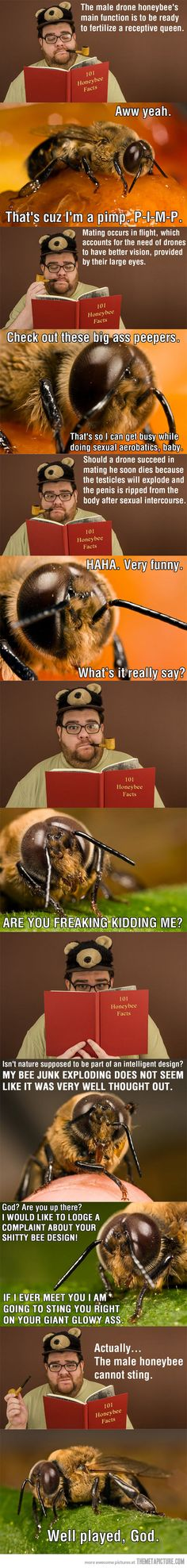 Funny pictures about A bee learns about bees. Oh, and cool pics about A bee learns about bees. Also, A bee learns about bees. Funny Love, Haha Funny, Hilarious, Funny Stuff, Funny Shit, Awesome Stuff, Funny Facts, Funny Quotes, Funny Memes