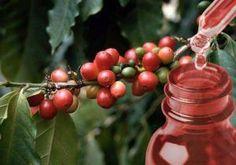 Cherry, Fruit, Red, Prunus