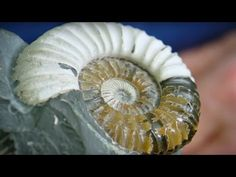 Sir David talks of his love for fossils and remembers his childhood days of discovering them. Watch the full program on BBC One Sunday UK. Fossil Hunting, Bbc Two, David Attenborough, Childhood Days, Fossils, Earth, Youtube, Fossil, Youtubers
