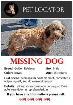 Lost pet flyer template | Lost Pet and Pet Adoption Flyers | Pinterest