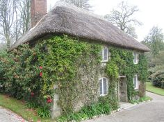 Thatched cottage in the grounds of Lanhydrock House, Cornwall - Ivy out of control!