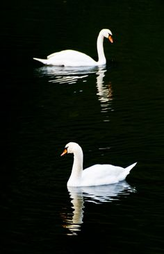 this is an example of balance because a swan is on each side of the photo.