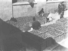 Jaffa, Palestine - Sorting and Packing Citrus Fruit (1920s)