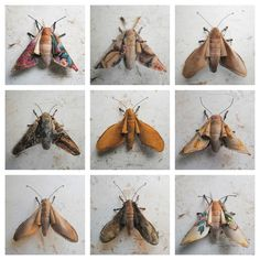 Textile Moths By Mister Finch