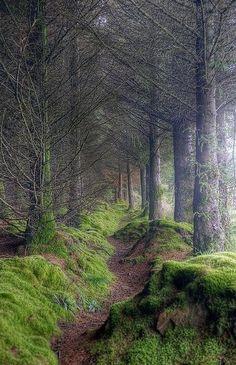 Caminho em meio a floresta na Escócia.