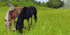 2 of the horses I want 🐎 😘 Star Stable Online, Star Stable Horses, Horse Videos, Horses For Sale, Palomino, Horse Art, Wild Horses, Stables, Animals And Pets