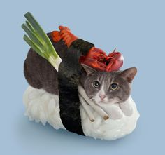 Nekozushi - Sushi Cats are the bizzare creations of Japanese company Tange & Nakimushi Peanuts. Advertising campaign for their latest product Neko-Sushi. I Love Cats, Crazy Cats, Cute Cats, Funny Cats, Funny Animals, Cute Animals, Funniest Animals, Cats Humor, Cat Fun