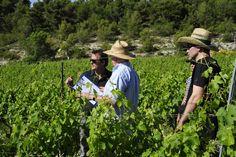 Domaine de la Verriere #Provence #Wines @ExtremeWineCB