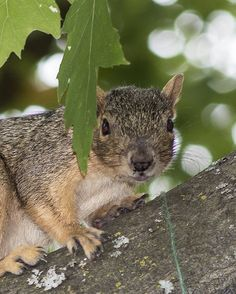Squirrel   by ANDREW JACOB HAGER, via Flickr
