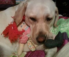 salsa dog and her dollie