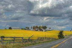 Kentucky back road. Mason County, Kentucky. Maple Leaf Road.