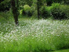 coton manor - wildflower meadow
