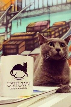 Cat Town Cafe, america's 1st cat cafe!