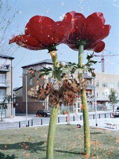 Stephen Gill, flowers