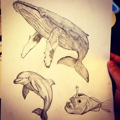 Whale dolphin and anglerfish requested by @Hayden_aron. I'm still taking requests on any ocean animal so feel free to request!  #whale #humpback #humpbackwhale #whales #dolphin #bottlenose #dolphins #anglerfish #drawing #animals #fish #art #whaledrawing #dolphindrawing #fishdrawing #requests by oceancreaturesfacts