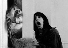 The Kitty Shining