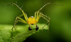A macro view of a Spider at Dehing Patkai Wildlife Sanctuary at Tinsukia district on August 6, 2014 in Assam, India.