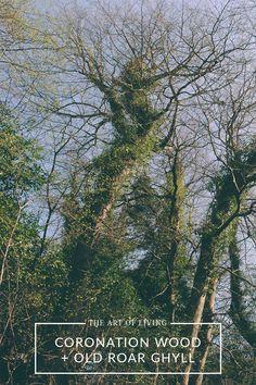 Coronation Wood + Old Roar Ghyll