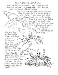 How to Draw Worksheets for Young Artist: How to Draw A Hermit Crab Worksheet. project notes are at the blog. http://drawinglessonsfortheyoungartist.blogspot.com/2013/04/how-to-draw-hermit-crab-worksheet.html