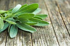 Šalvia lekárska - Salvia officinalis: účinky (aj nežiadúce) a použitie Floating Plants, Floating Garden, Sage Herb, Salvia Officinalis, Garden Nook, Indoor Water Garden, Potager Bio, Herb Seeds, Gardens