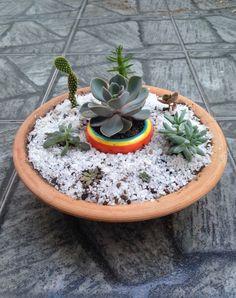 Mini jardim de cactos e suculentas. Créditos da foto: Márcia Cruz