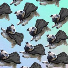 Fly pug! Pinterest: @divinewanderer2