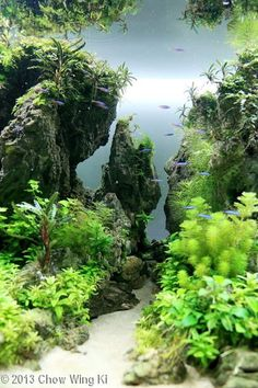 OPEN SPACE/TRENCH/TUNNEL, ROCKS HARD SCAPE: Landscape