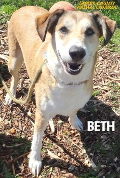 ADOPTED!  Tag# 10576 Name is Beth  Hound Mix Female-unsure of spay Approx. 5 years old Sweet girl that is lower energy!   Located at 2396 W Genesee Street, Lapeer, Mi. For more information please call 810-667-0236. Adoption hrs M-F 9:30-12:00 & 12:30-4:15, Weds 9:30-12:00 & Sat 9:00-2:00   https://www.facebook.com/267166810020812/photos/a.849617805109040.1073742161.267166810020812/849618411775646/?type=3&theater