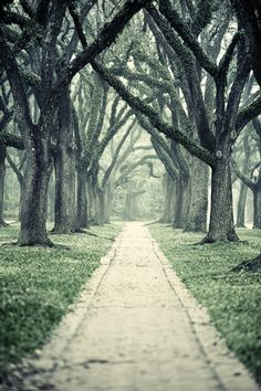 Hope to one day find myself wandering down this lane with a Jane Austen novel in my hands.