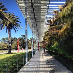 California Academy of Science by Renzo Piano #sanfrancisco #california