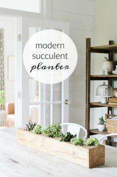 Modern Succulent Cen