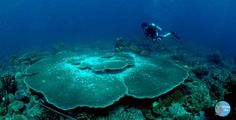 Diving at Anambas Island