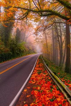 Red Forest of Autumn - City of Cuenca, Spain and The Road is Beautiful.