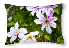 "Lovely Clematis 20"" x 14"" Throw Pillow by Flamingo Graphix John Ellis.  Available in many formats, sizes and prices. Note: watermark ""Fine Art America"" will not appear on final print."