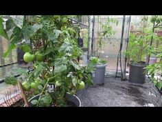 Part 2 of 6: Organically Managing Diseases & Insects in Garden Greenhous...