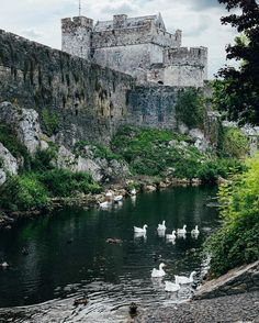 #CahirCastle is one of the largest castles in Ireland conveniently situated on River Suir (which makes it look like a medieval mote!) - #TheAuthenticWay #AuthenticIreland