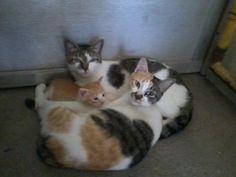 catterrifficccccccc.. three